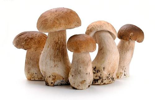 蘑菇的结构图名称